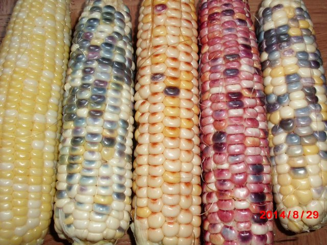 Astronomy Domine sweet corn.