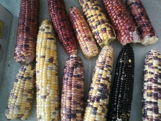 astronomy domine sweet corn