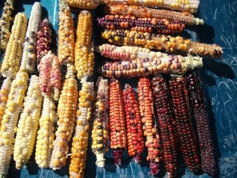 Diablo Espectro Sweet Corn