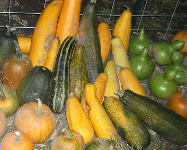 Lagenaria and zucchini squash